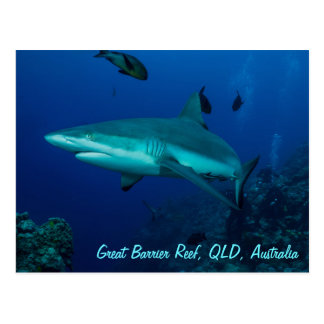 Reef Shark on the Great Barrier Reef Postcard