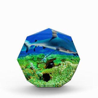 Reef Shark Photos Acrylic Award