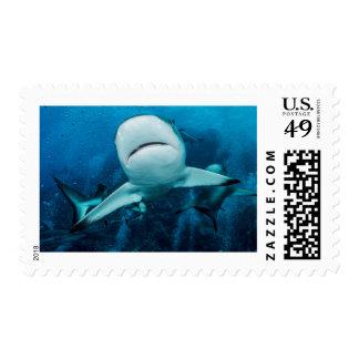 Reef Shark Postage Stamp