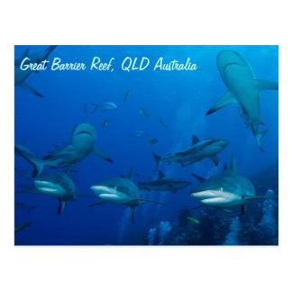 Reef Shark Postcard