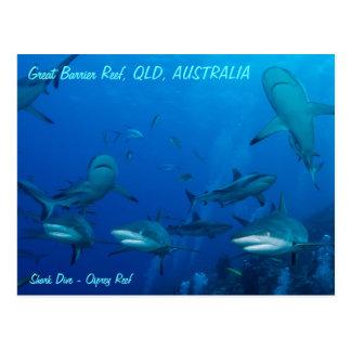 Reef Shark Postcard Post Cards