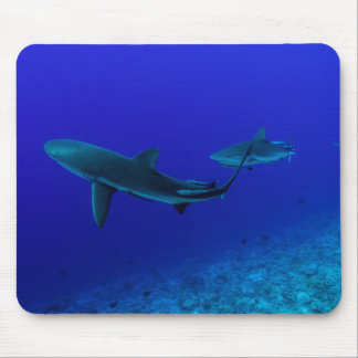 Reef Sharks Great Barrier Reef Coral Sea Mouse Pad