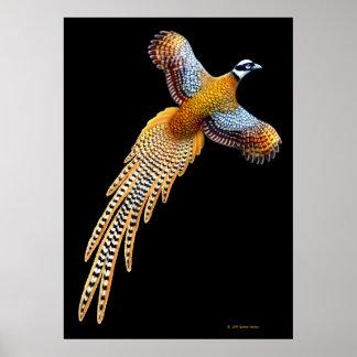 Reeves Pheasant Flying Print
