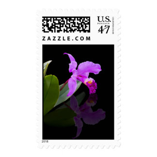 Reflected Beauty Orchid Postage stamp