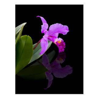 Reflected Beauty Orchid  Postcard