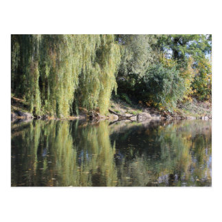 Reflected Willow Trees In River Postcard