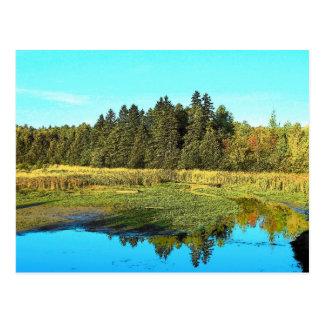 Reflecting Pond Postcard