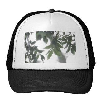 Reflecting the Sun Trucker Hat