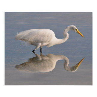 Reflecting White Heron Poster
