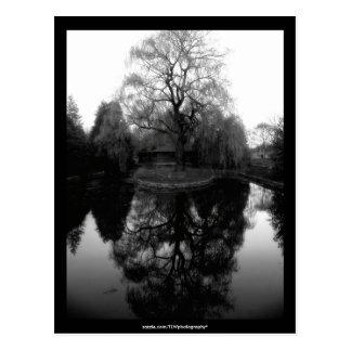 Reflecting Willow black&white - Postcard