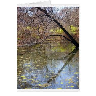 Reflection - Bronx River NYC Card