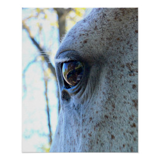 Reflection in Horse's Eye Poster