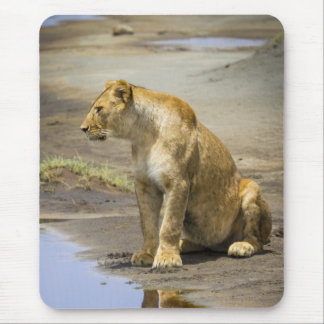 Reflection of a Lioness Mouse Pad