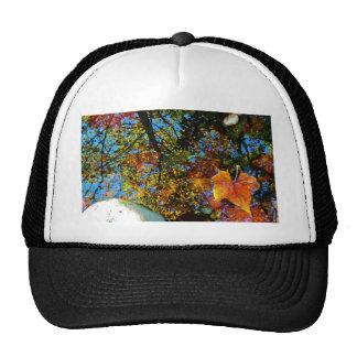 Reflection of Fall Trucker Hat