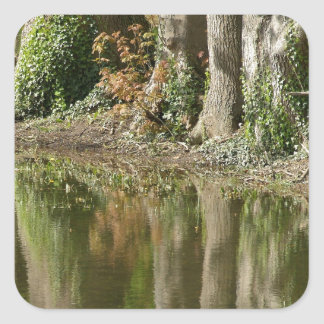 Reflection of Three Trees Square Sticker