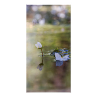 Reflection photo card