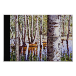Reflection with Birch Tree Poster