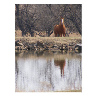 Reflections: Horses by a Pond Postcard