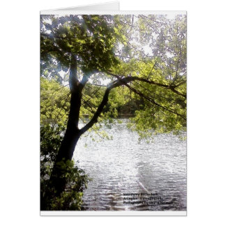 Reflections in the woods card
