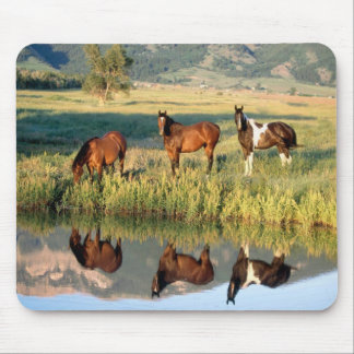 Reflections Mouse Pads