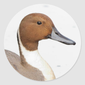 Reflections of a Northern Pintail Duck Classic Round Sticker
