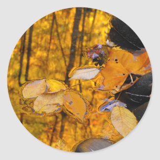 Reflections of Autumn Gold Classic Round Sticker