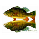 Reflections of Fish Post Cards