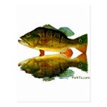 Reflections of Fish Postcard