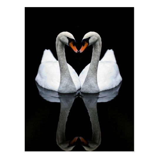Reflections of Love, Heart Shape, White Swans Postcard