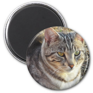 reflections of the fading sun 2 inch round magnet