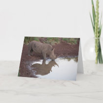 Reflections: Rhino Postcard