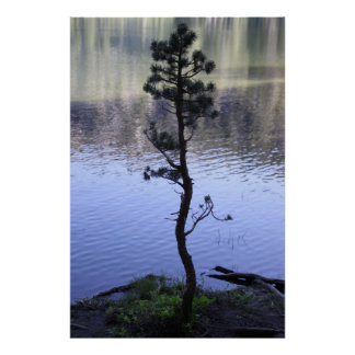 Reflections- Tree Posters