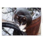 Reflective Tuxedo Cat on Barrels note cards