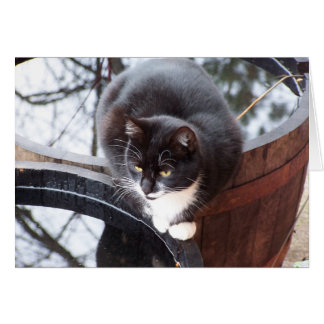Reflective Tuxedo Cat on Barrels note cards