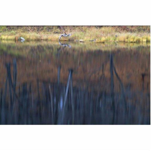 Reflexión abstracta de un bosque de madera dura en esculturas fotograficas