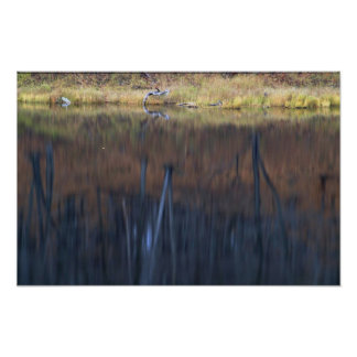 Reflexión abstracta de un bosque de madera dura en posters