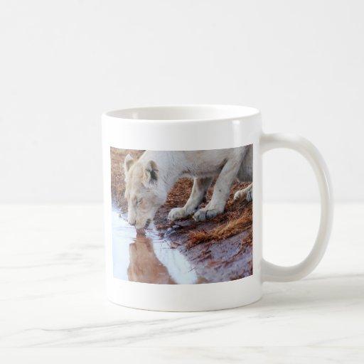 Reflexión africana de los leones tazas de café