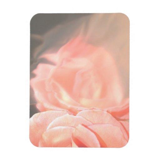 Reflexión color de rosa rosa clara en plata imán rectangular