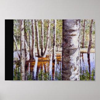 Reflexión con el árbol de abedul posters