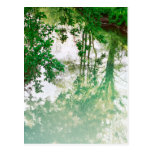 Reflexión de árboles postal