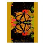 Reflexión de la mariposa de monarca tarjetas postales