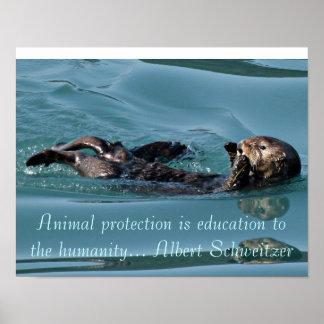 Reflexión de la nutria de mar con el poster famoso