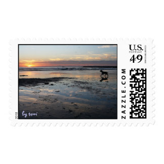 Reflexión de la playa del perro timbres postales