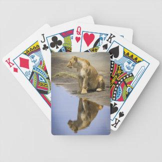 Reflexión de los naipes de una leona baraja cartas de poker