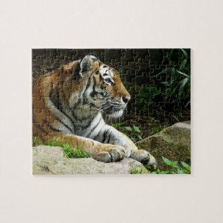 Reflexión de rompecabezas del tigre