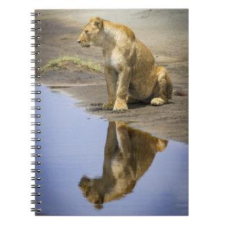 Reflexión de un cuaderno de la leona