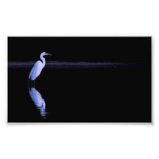 reflexión de un Egret Fotografía