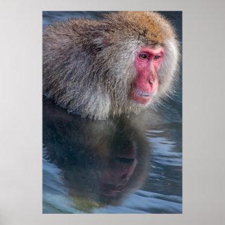 Reflexión de un mono de la nieve poster