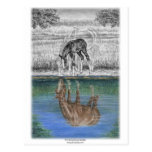 Reflexión del agua del potro del caballo tarjeta postal