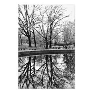 Reflexión del árbol del invierno en Central Park Arte Con Fotos